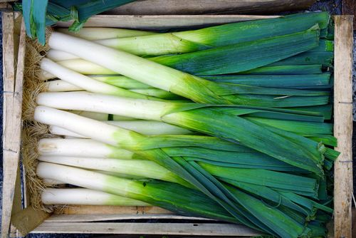 The Differences Between Scallions Vs Green Onions